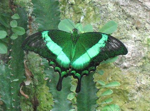 Выставка тропических бабочек в Никитском ботаническом саду