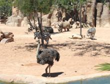Биопарк в Валенсии