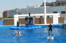 Дельфинарий в Валенсии, в океанариуме города наук