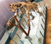 Музей естественных наук в Валенсии